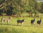 Exotic Game Lodge for sale in Brits, South Africa (Arotin Game Lodge) (084 332 3788) on https://arotingamelodge.co.za